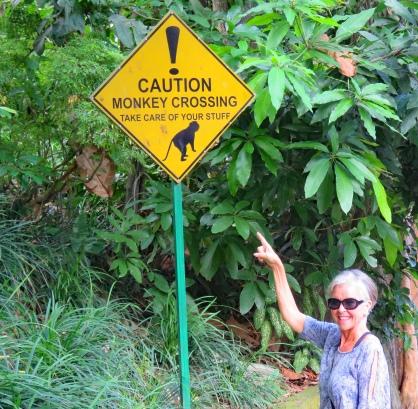 bali 4_monkey caution_edited-1