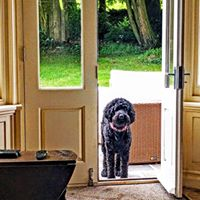 Scout waiting for his walk,