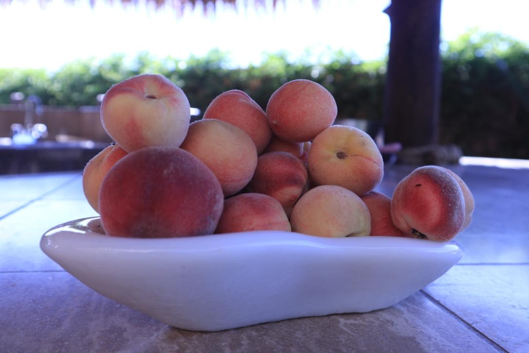 Apricots_bowl full