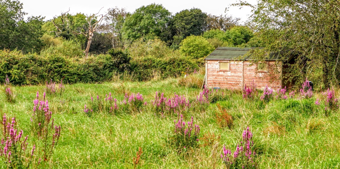 BH_old garden