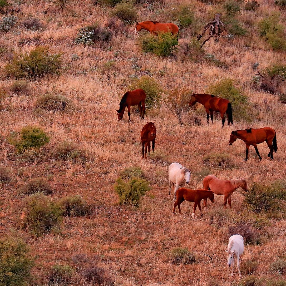FH Mustangs_11 27 19_nine_edited-1