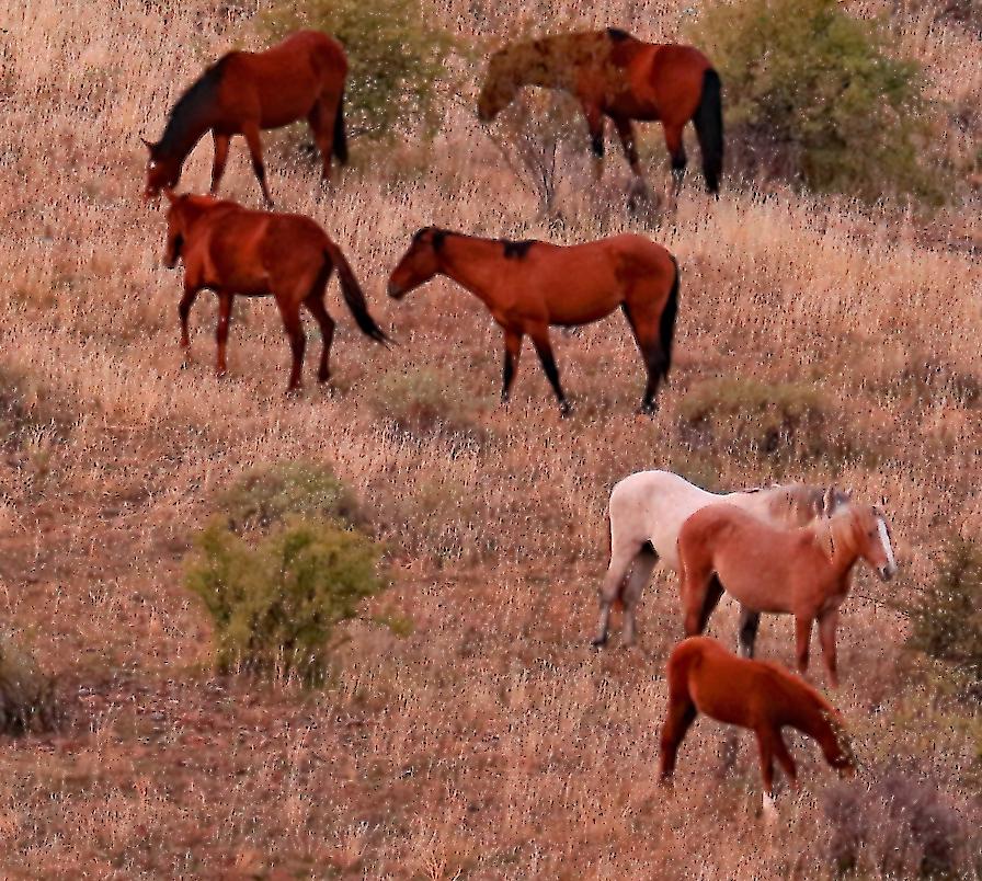 FH Mustangs_11 27 19_seven_edited-1_inPixio