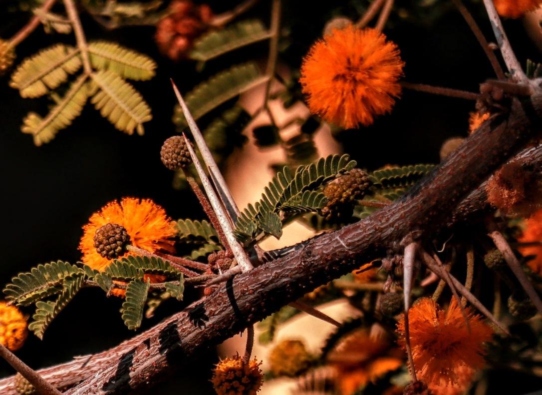 Thorn & Flowers