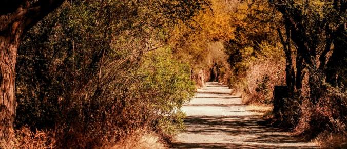 Walk in San Miguel de Allende