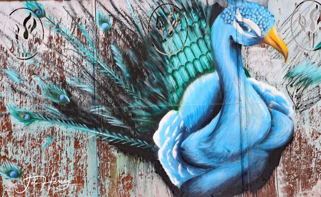 01 17 20_peacock mural_edited-2