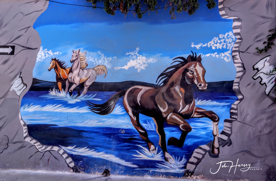 sma street art tour_2020 Mar 12_Horses_edited-2