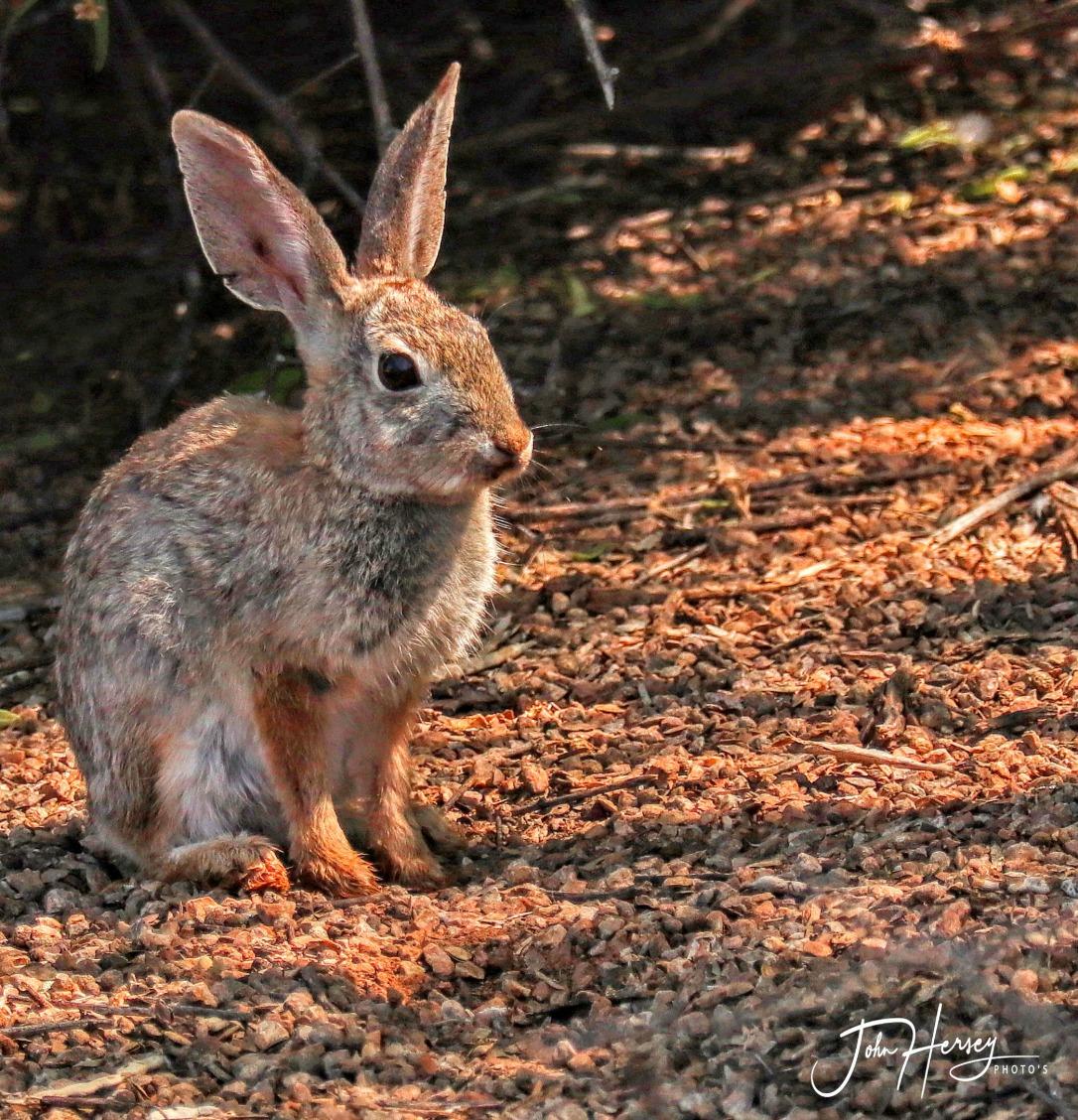 AZ Reparian_2020 Apr 17_bunny_edited-2