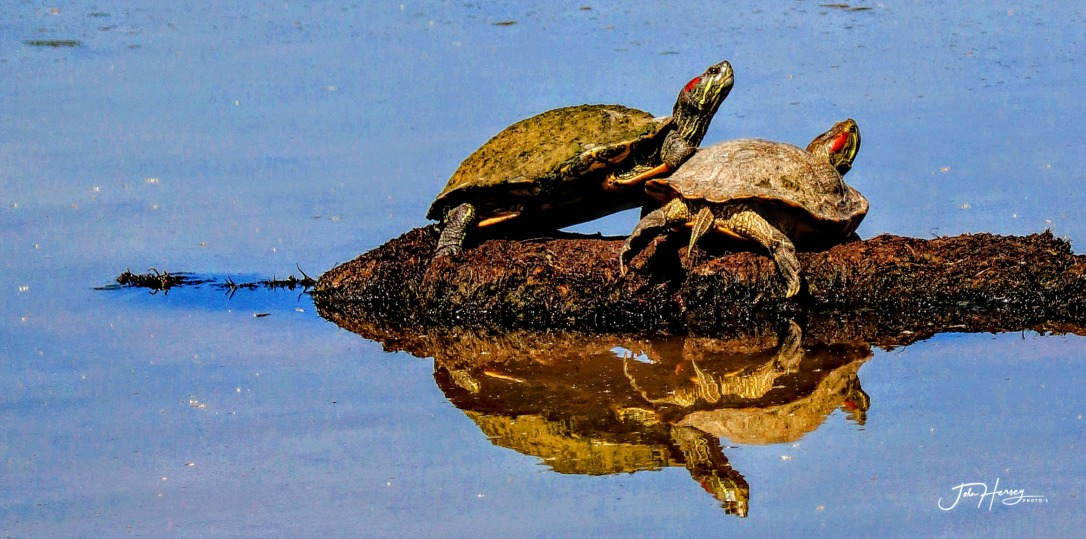 AZ Reparian_2020 Apr 17_luv turtles_edited-2