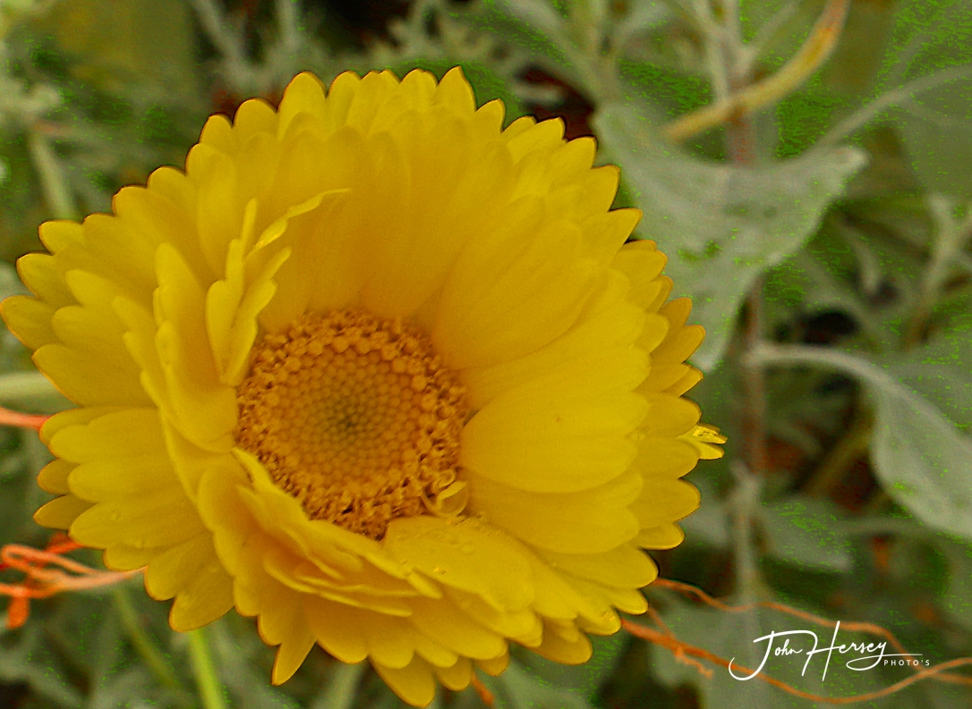 cave creek_2020 Apr 11_1 yellow_edited-2